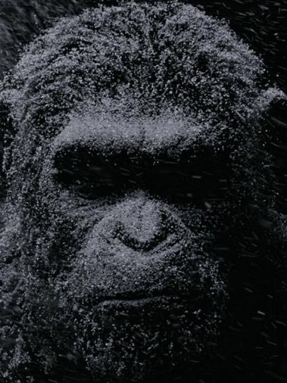 illustration de La planète des singes suprématie