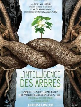 affiche du film L'Intelligence des Arbres